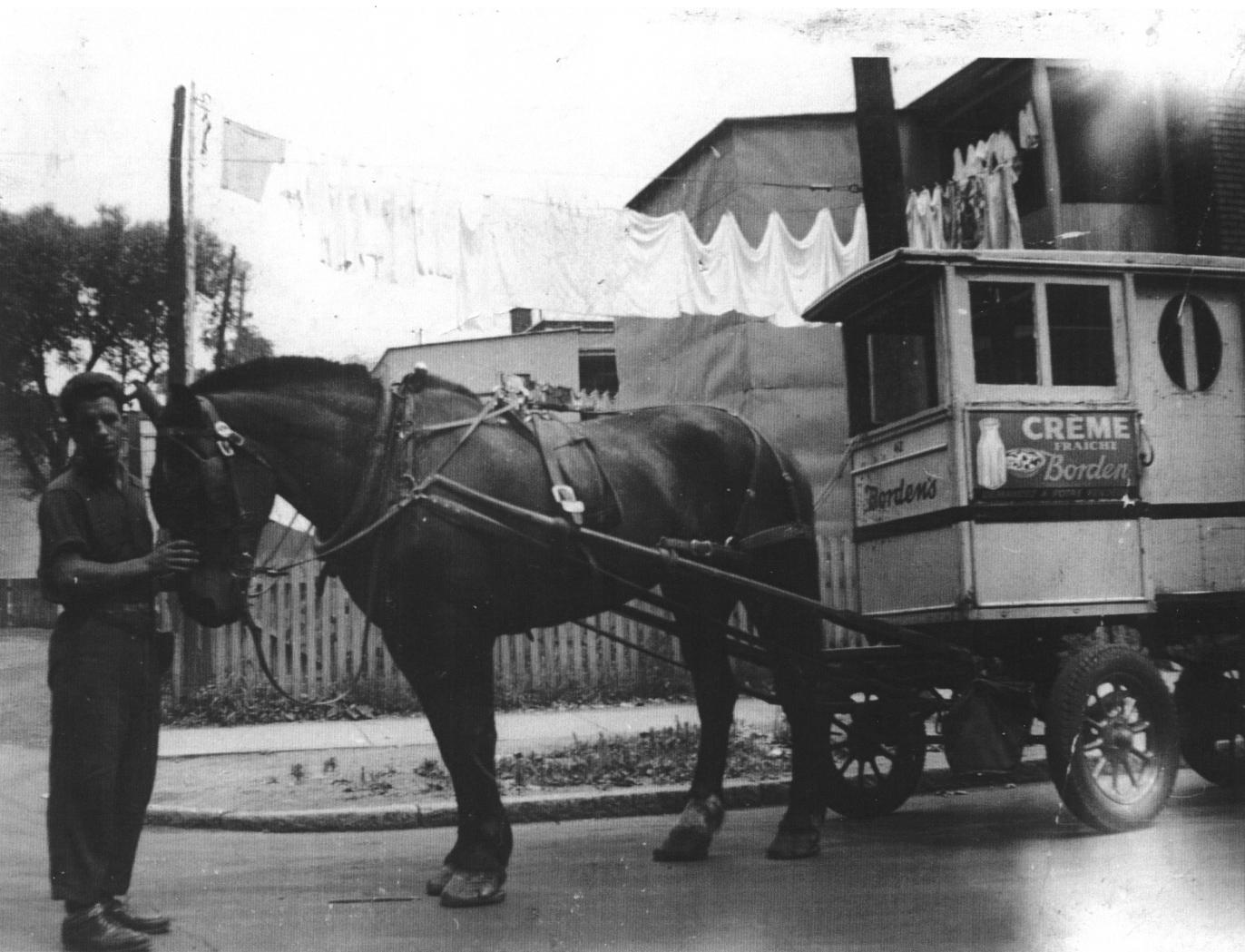 André Vallée, laitier à la Laiterie Borden, et son attelage, vers 1950. Collection Vallée